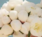 Свадебная флористика в Крыму